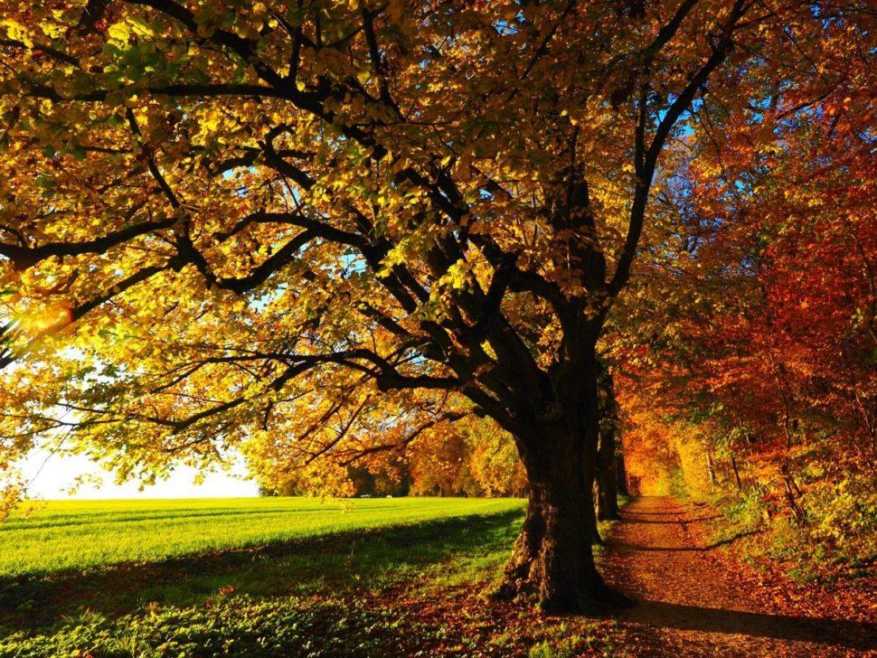 Svět vůně podzim